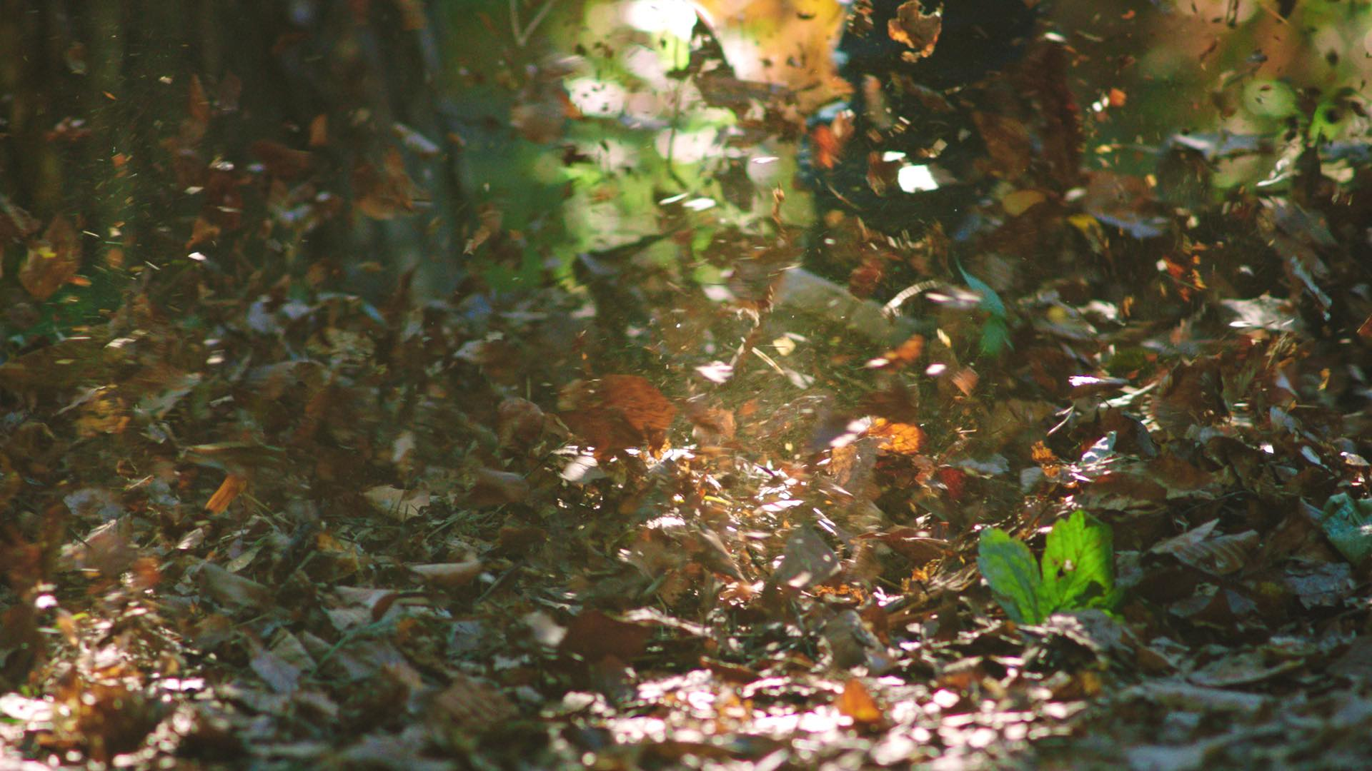 WheelsonWoods_Screenshot_3